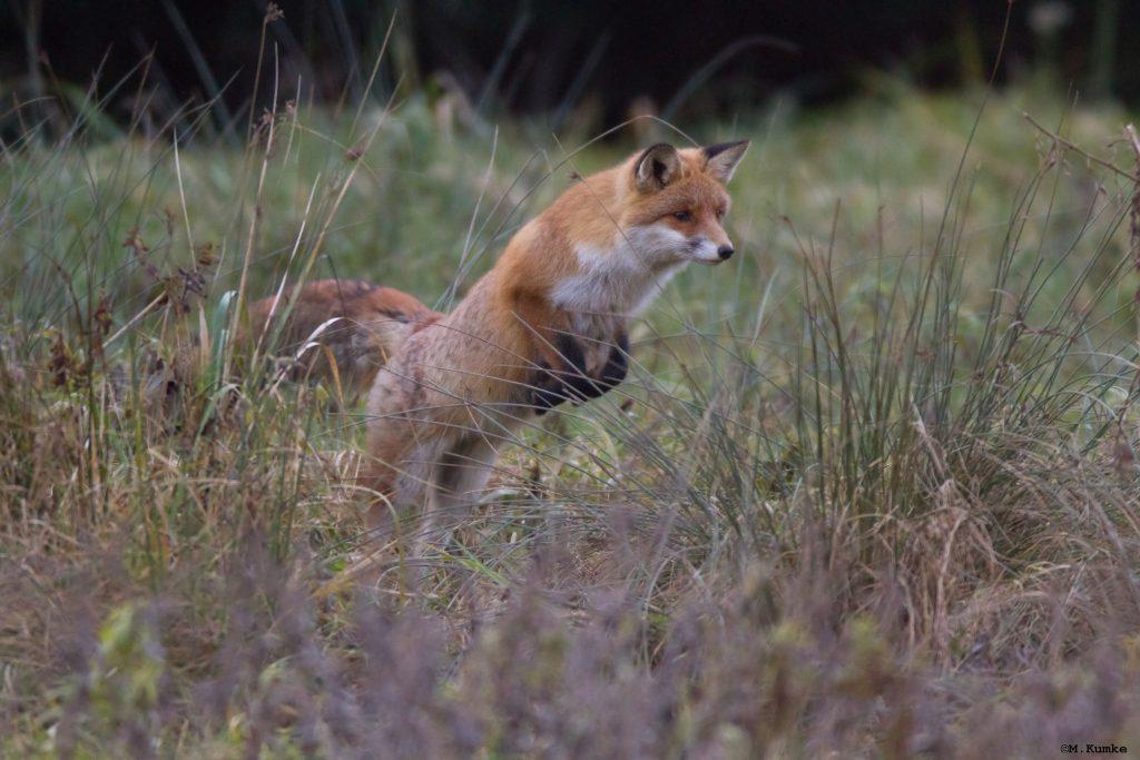 Bild Freizeit Lernen  mit Fuchs und Coyote
