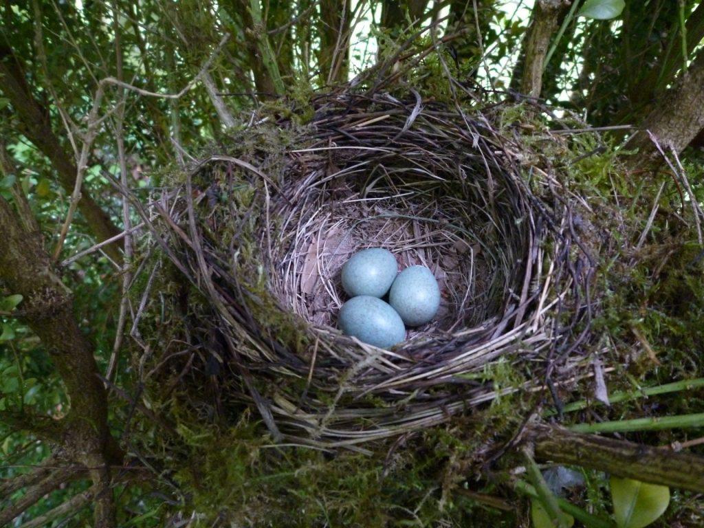 Bild Freizeit Vogelforscher gesucht!