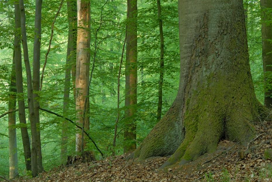 Bild Freizeit Der Wald – Von Ameisenstraße bis Wildschweintempel