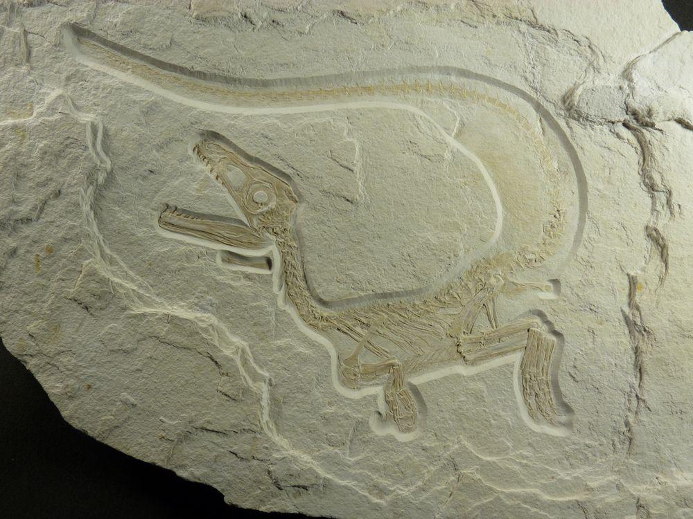 Bild Freizeit Dinos – Vorfahren unserer Vögel