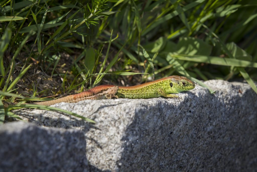 Bild Freizeit Jugend trifft Biodiversität