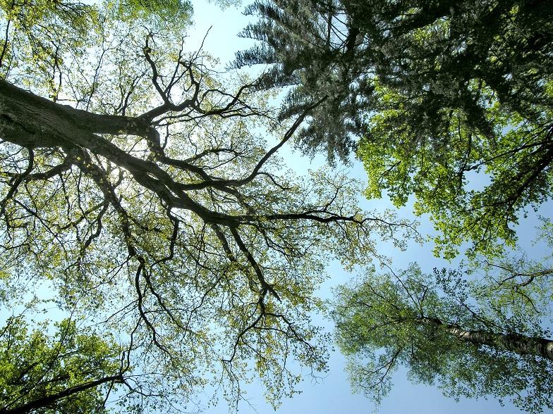 Bild Freizeit Naturspuren und Entspannung im Wald