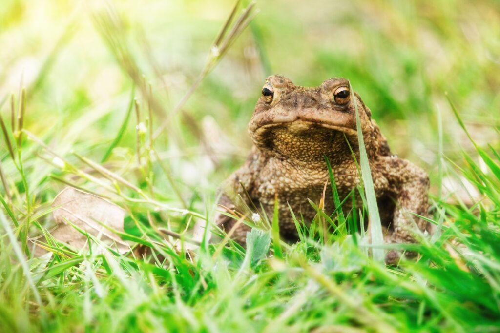 Bild Freizeit Tiere im Frühling: Warum wandern Kröten?