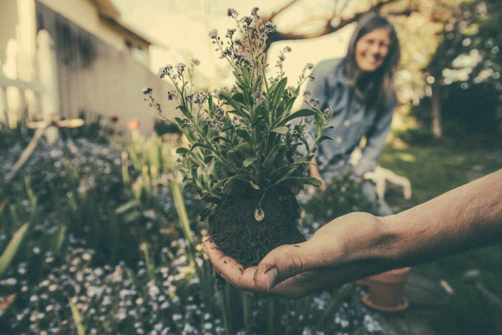 Bild Freizeit Essbare Pflanzen kennenlernen und selber aussäen