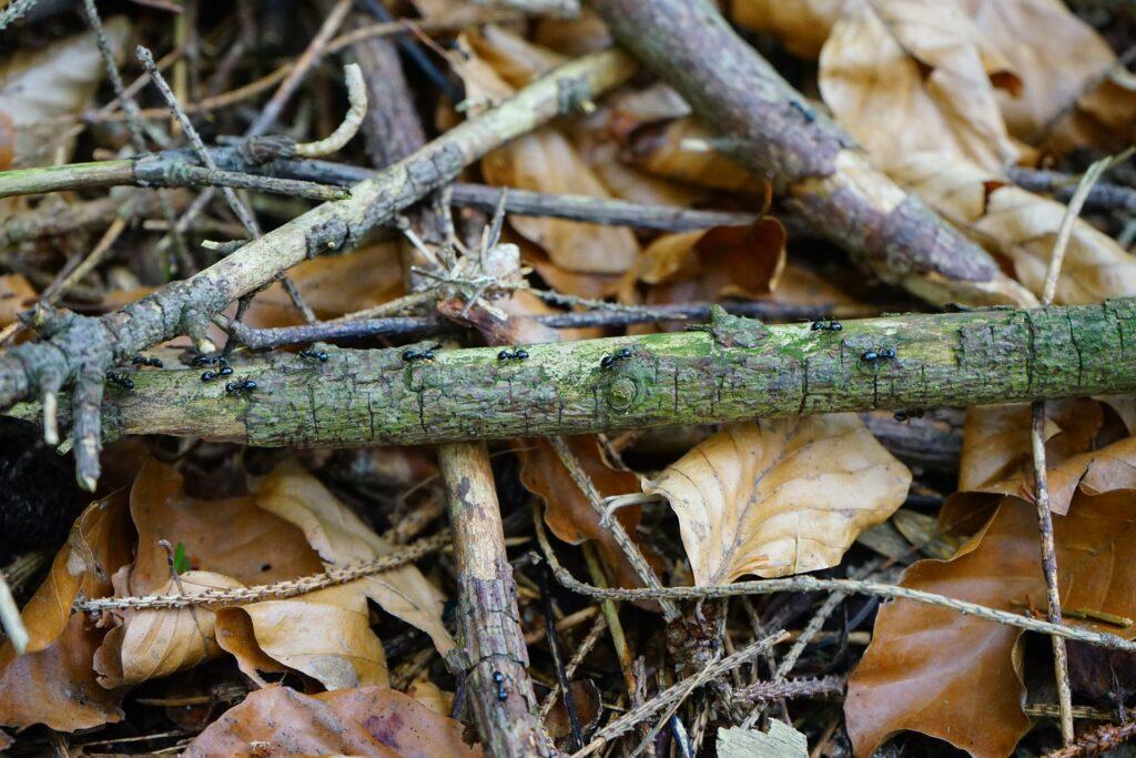 Totholz erfreut viele Insekten
