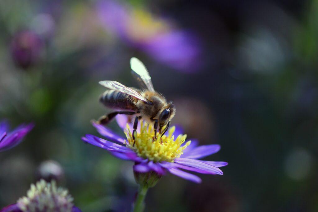 Hübsch und Bienenfreundlich